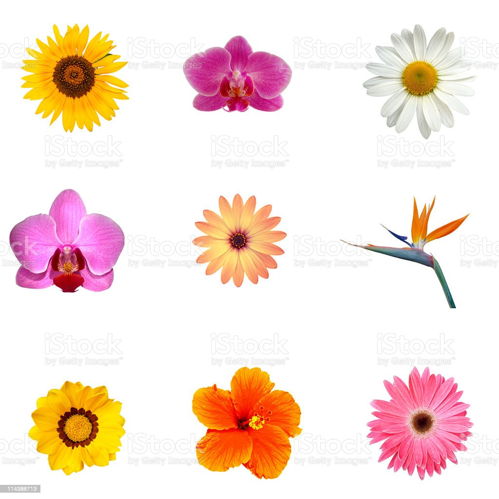 Different exotic flowers XXXL stock photo