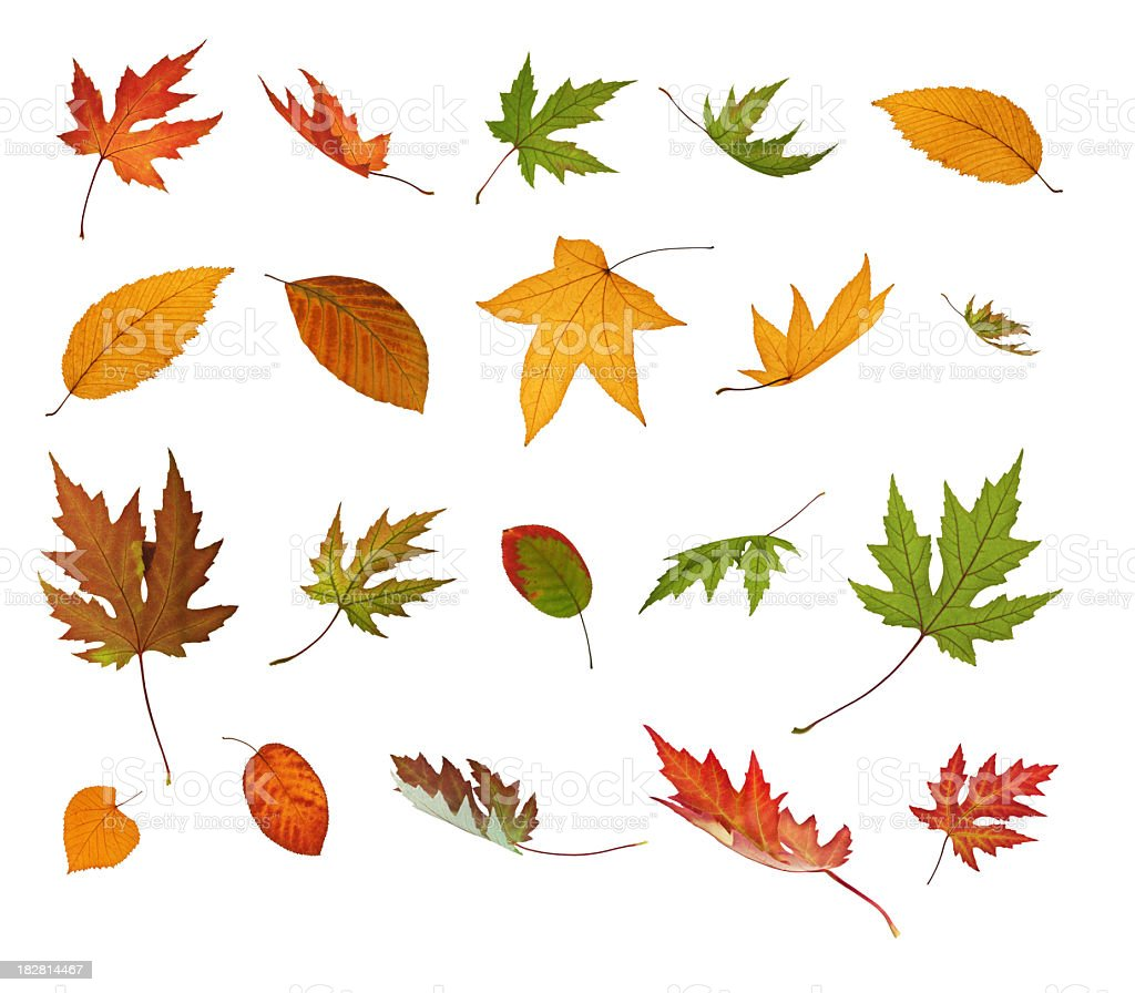 Different Falling Autumn Leaves stock photo