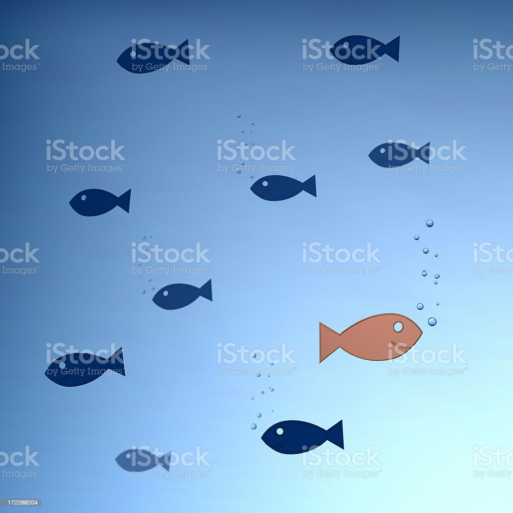 Different Fish XL royalty-free stock photo