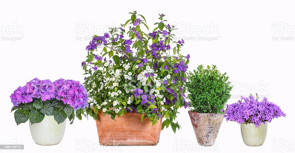 Different flower pots stock photo