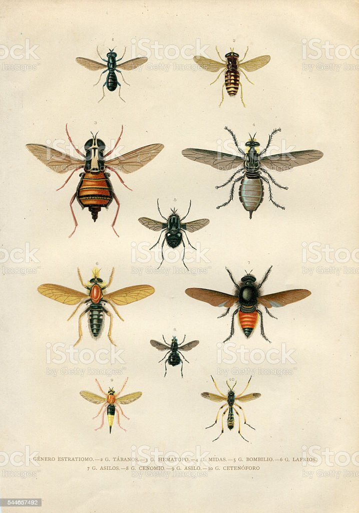 Different fly insects illustartion 1881 stock photo