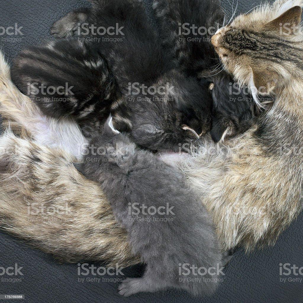 Different kitten is feeding stock photo