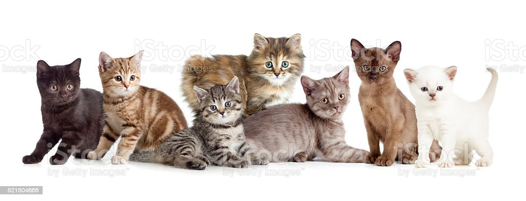 different kitten or cats group stock photo