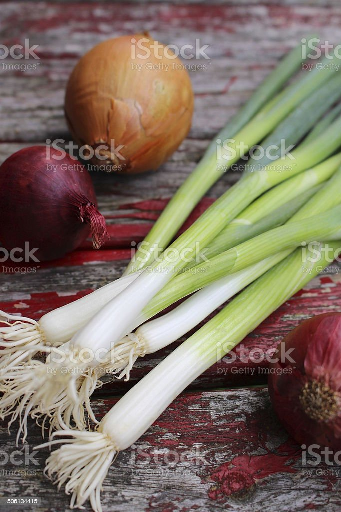 different onions stock photo
