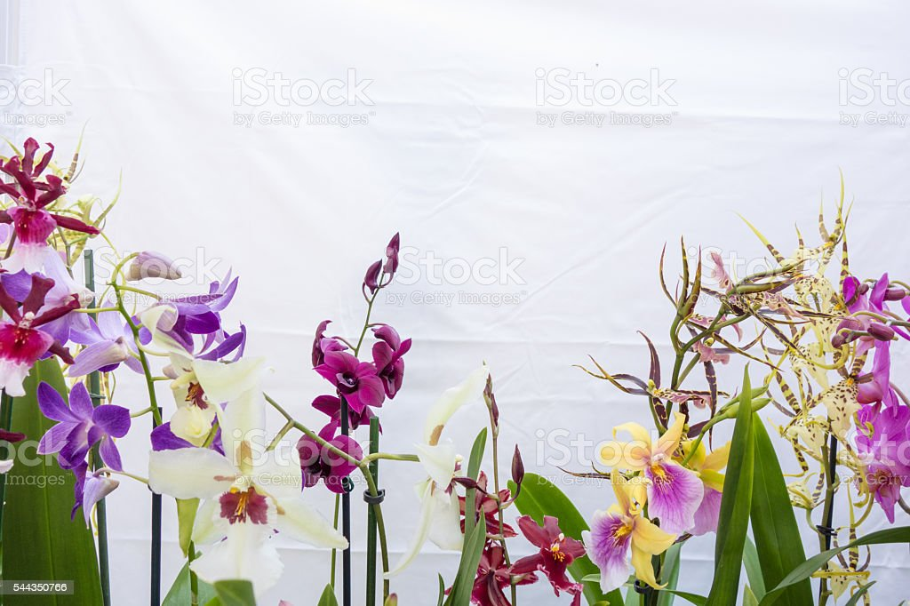 Different Orchid Plants Display stock photo