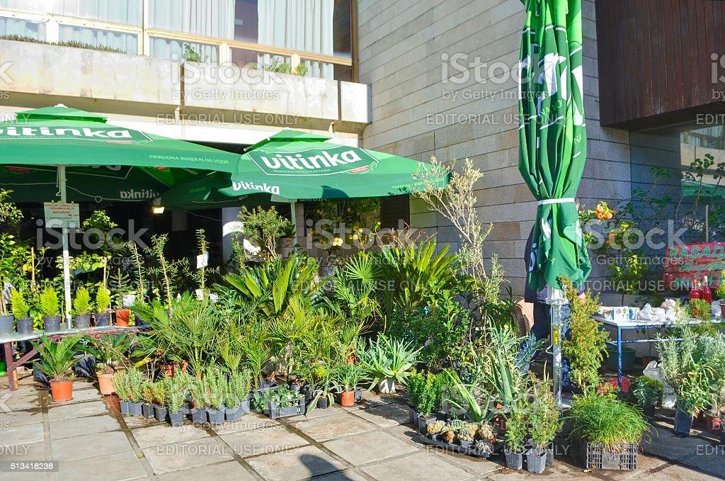 Różne szczelną obudowę zielonych roślin. zbiór zdjęć royalty-free