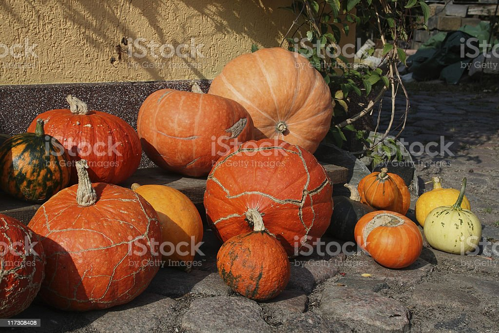Different Pumpkins stock photo