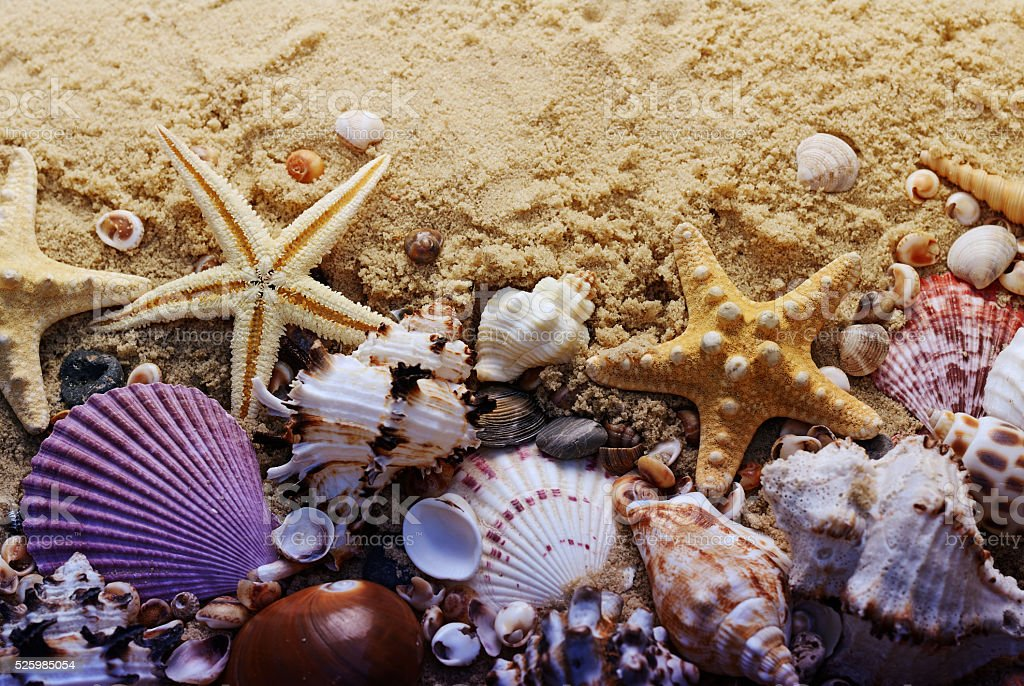 Different seashells on the sand. Summer beach background. Vacation poster stock photo