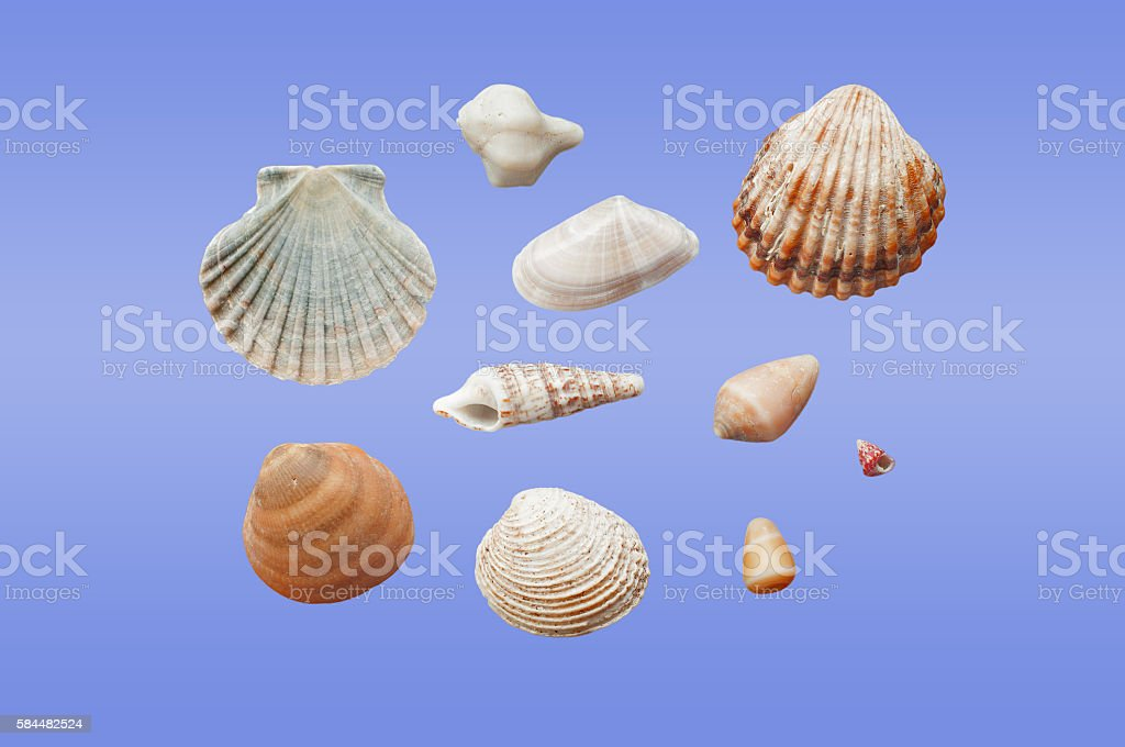 Different types of seashells stock photo