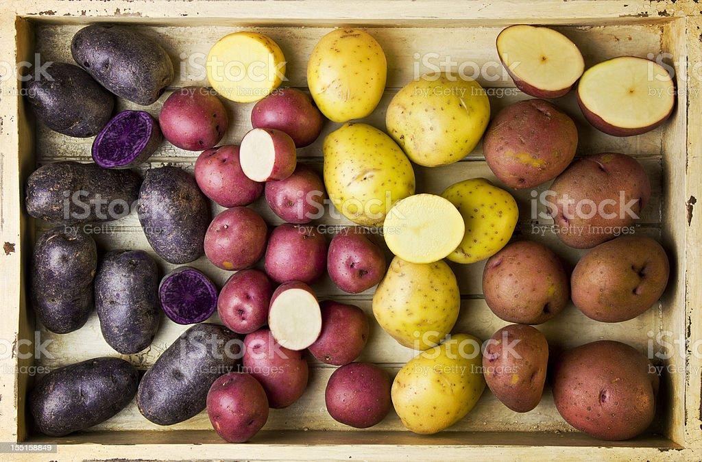 different varieties of potatoes stock photo