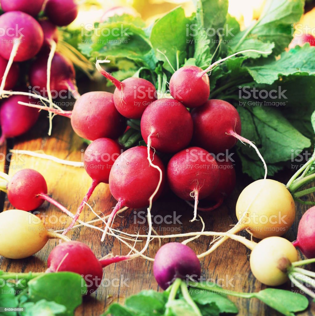 Different variety of fresh organic radishes on  rustic wooden background stock photo