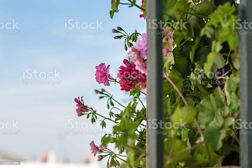 Outra vista da varanda da Andaluzia, repleto de flores em maio foto royalty-free