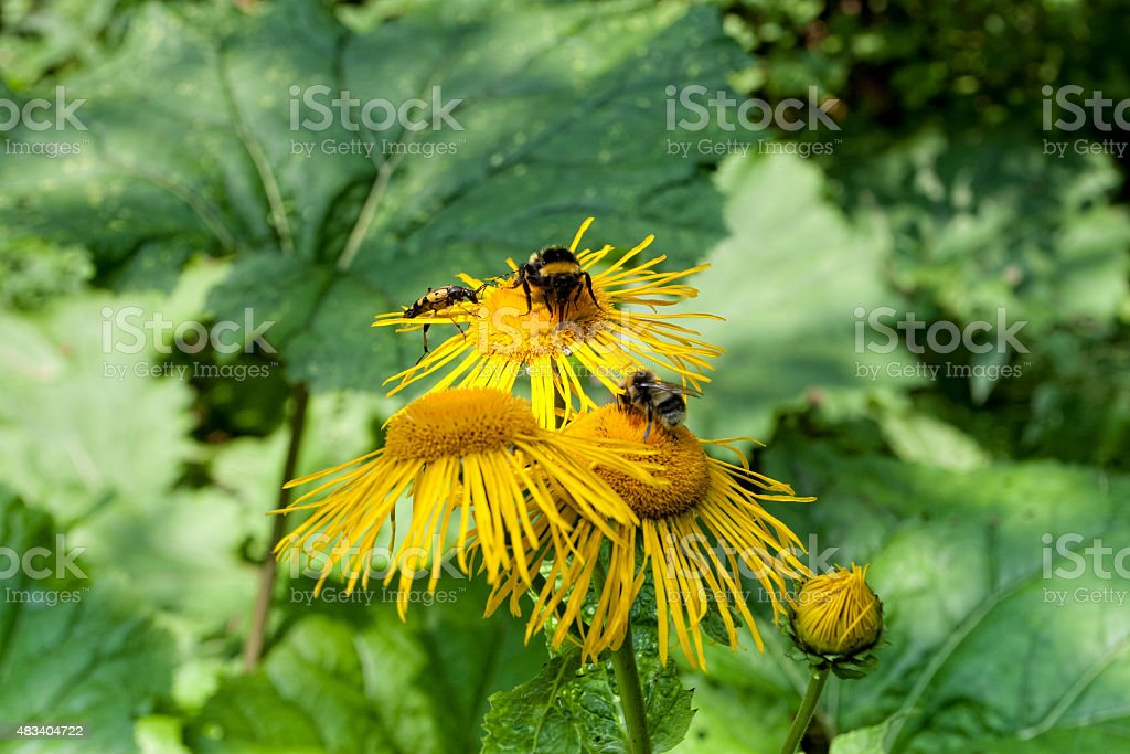 Differrent insects on the flower stock photo