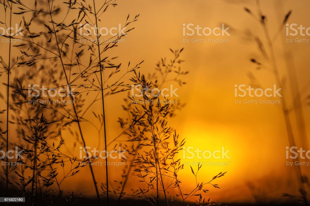 Diffusion stock photo