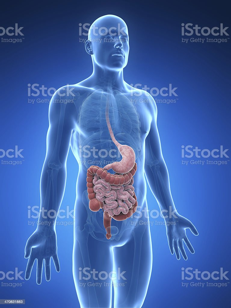Digestive system with blue diagram stock photo