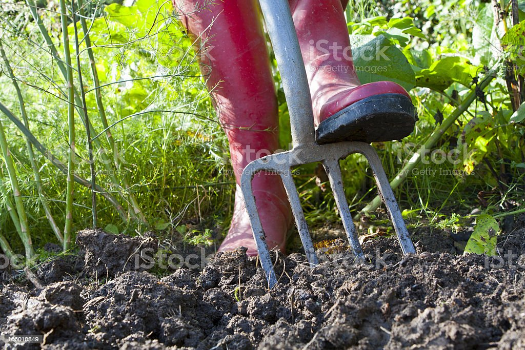 Digging an Overgrown Vegetable Garden royalty-free stock photo