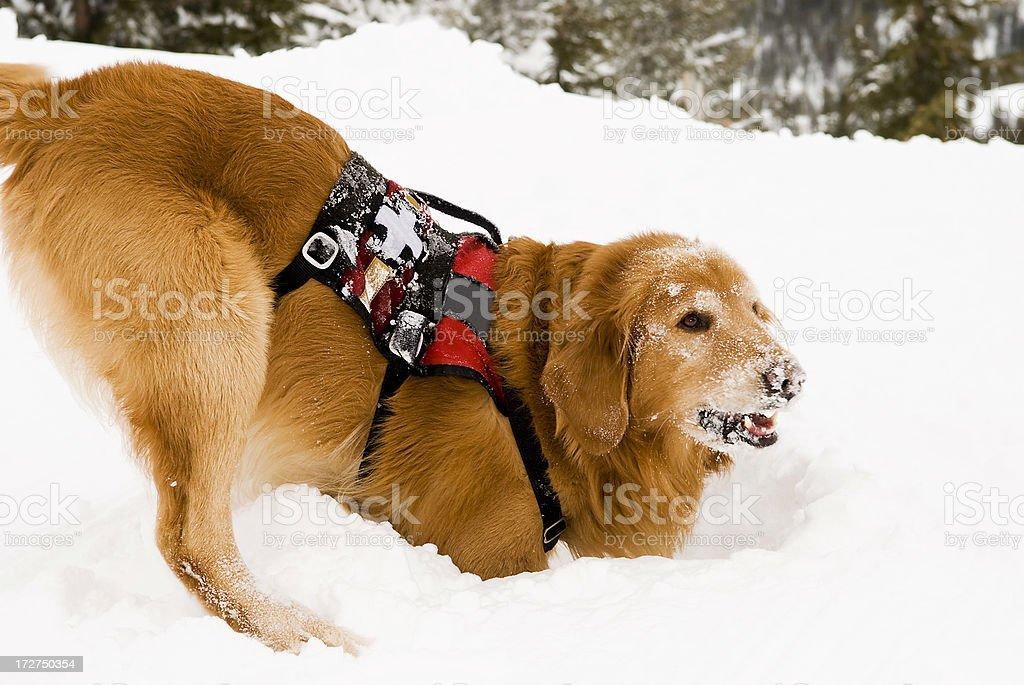 Hund Graben Lizenzfreies stock-foto