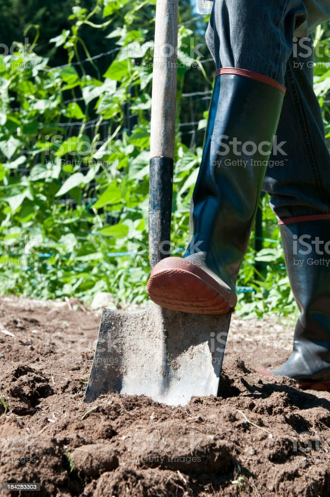 Digging in garden royalty-free stock photo