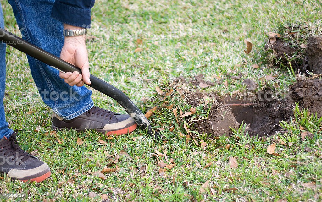 Digging in the Yard royalty-free stock photo