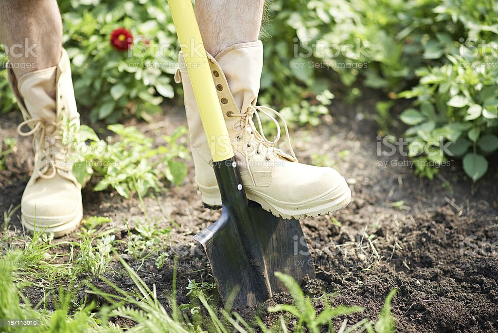 Digging the garden royalty-free stock photo