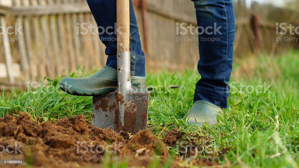 Digging the ground with a spade stock photo