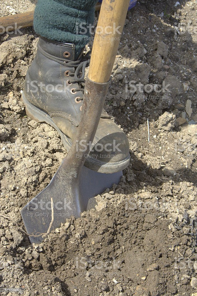 Digging with a cornish spade stock photo
