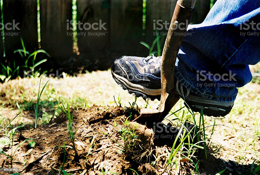Digging with Shovel royalty-free stock photo