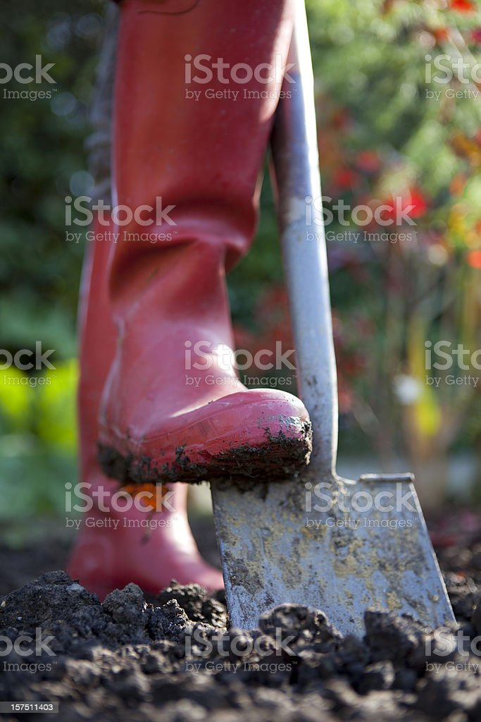 Digging With Spade in Garden royalty-free stock photo