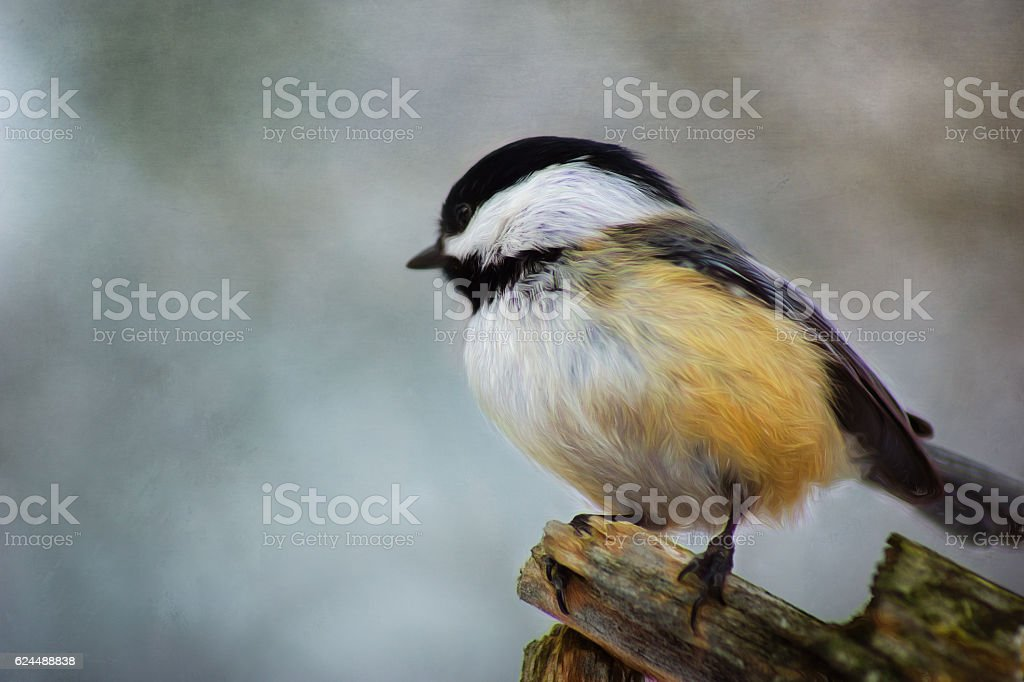 Digital art, paint effect, Black-capped Chickadee on branch stock photo