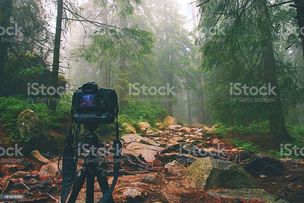 Digital camera on tripod in forest. stock photo