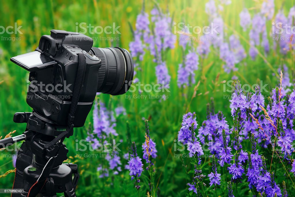 Digital professional camera on tripod shoot flowers in garden stock photo