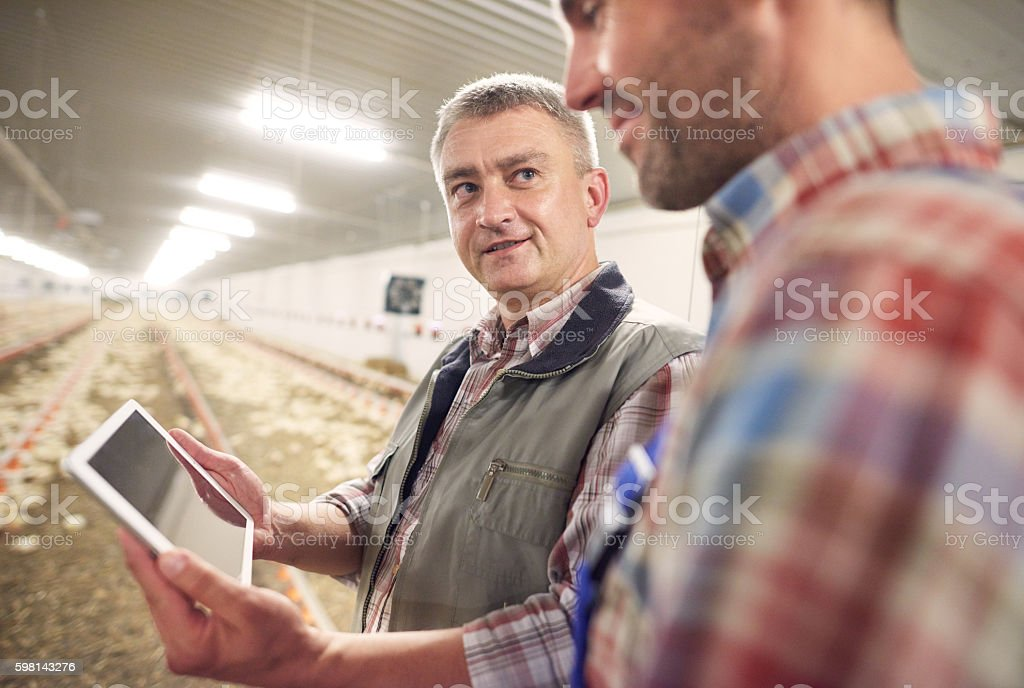 Digital technology used in chicken coop stock photo