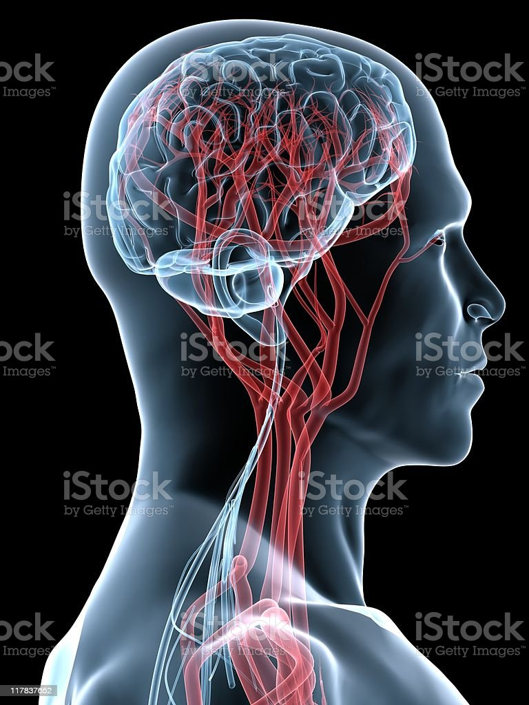 Digitally enhanced X-ray of a person's head and brain royalty-free stock photo