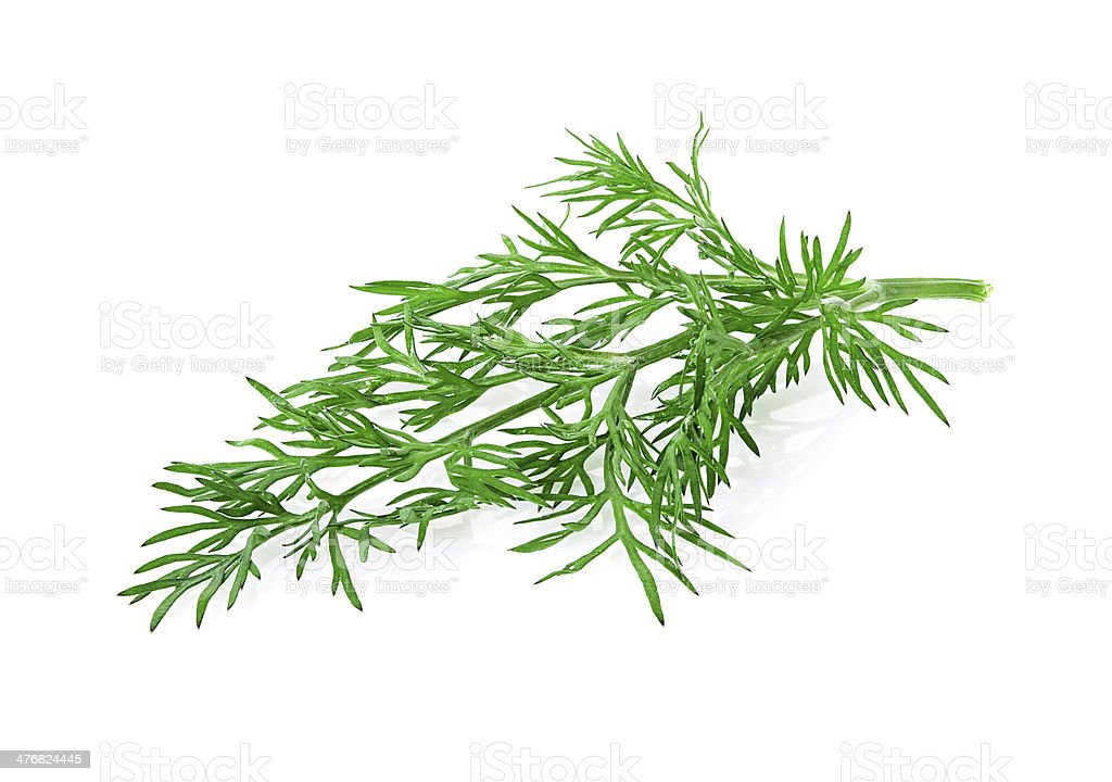 dill herb isolated on white background stock photo