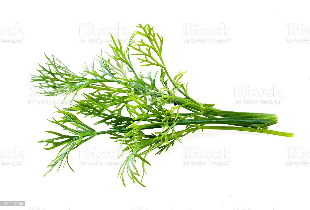 Dill isolated on white background stock photo