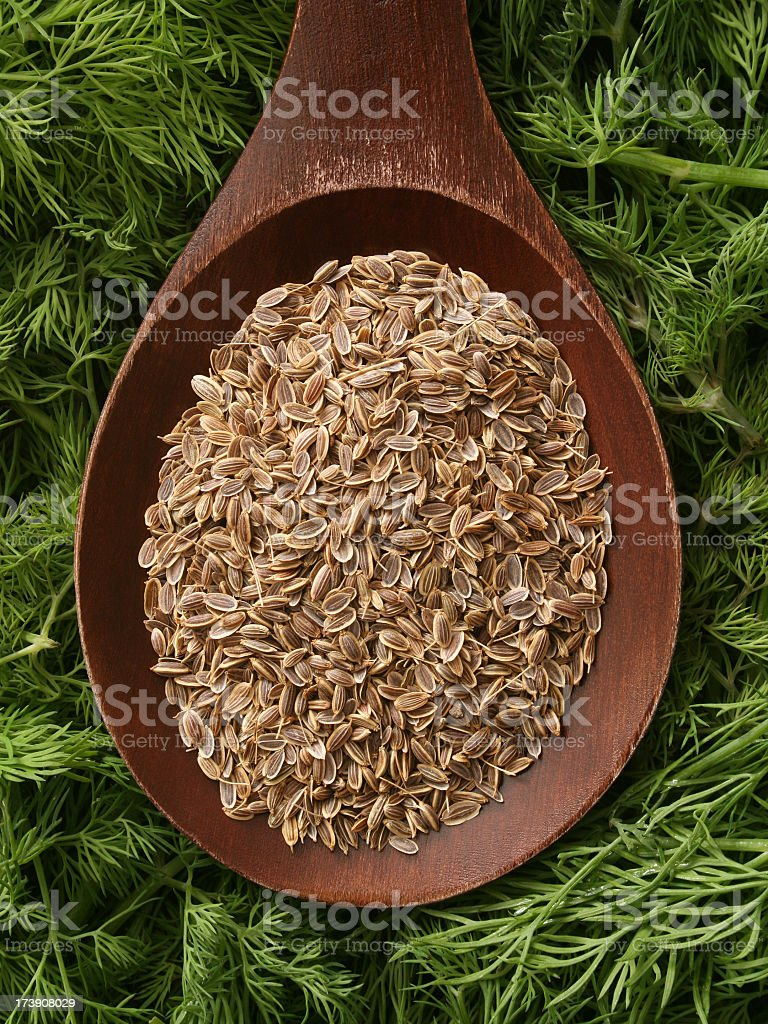Dill royalty-free stock photo