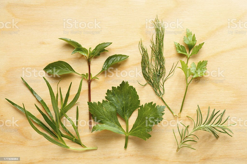 Dill, tarragon, mint, cilantro, parsley and rosemary composition royalty-free stock photo