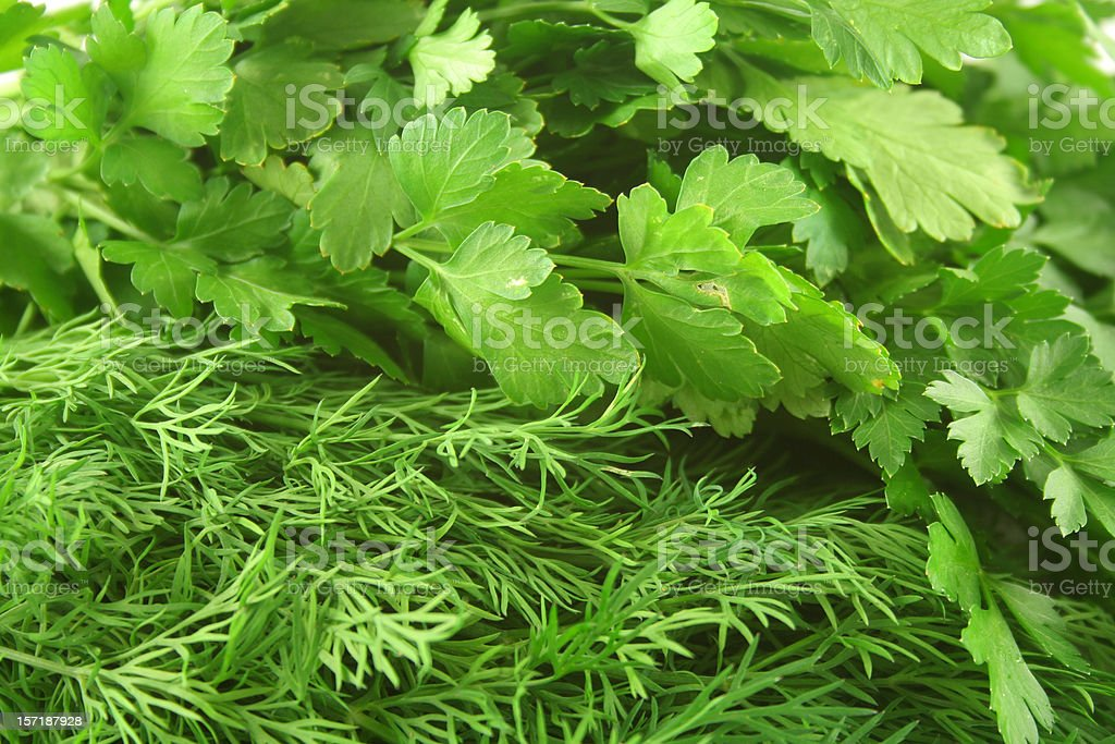 Dill weed and Italian parsley royalty-free stock photo
