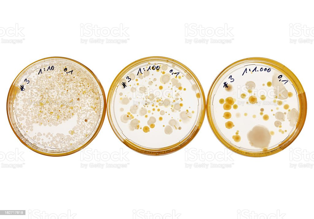 Dilution series of a bacteria culture in petri dishes royalty-free stock photo