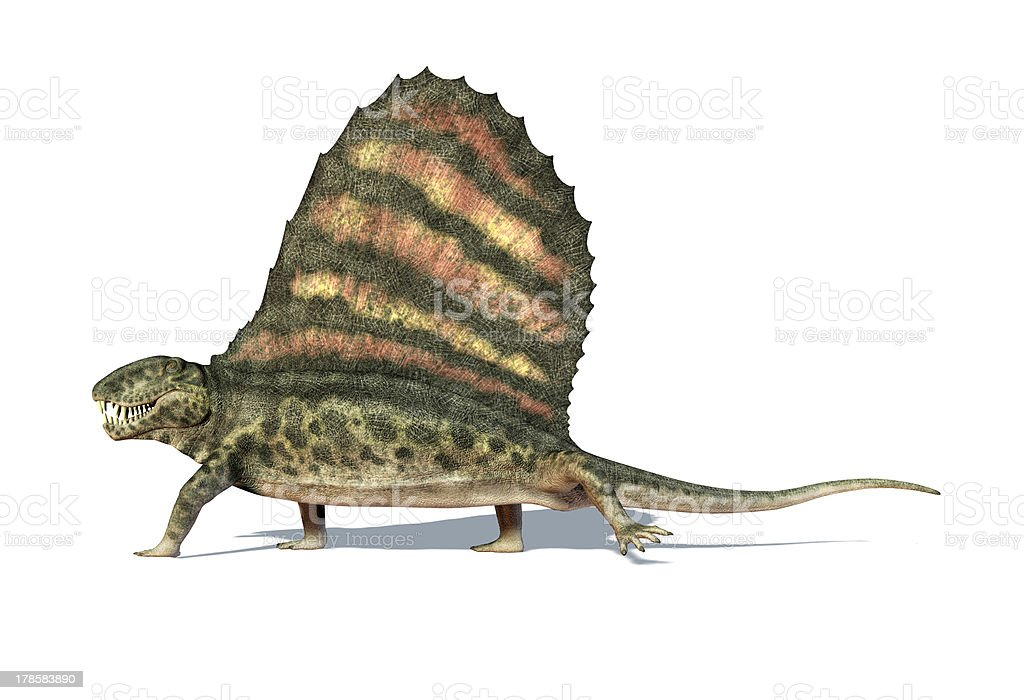Dimetrodon dinosaur. On white background with shadow and clipping path. stock photo