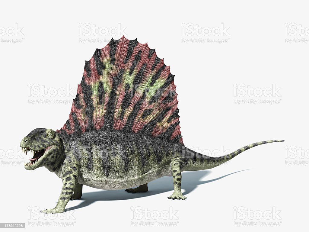 A Dimetrodon with its sail-like structure on its back stock photo