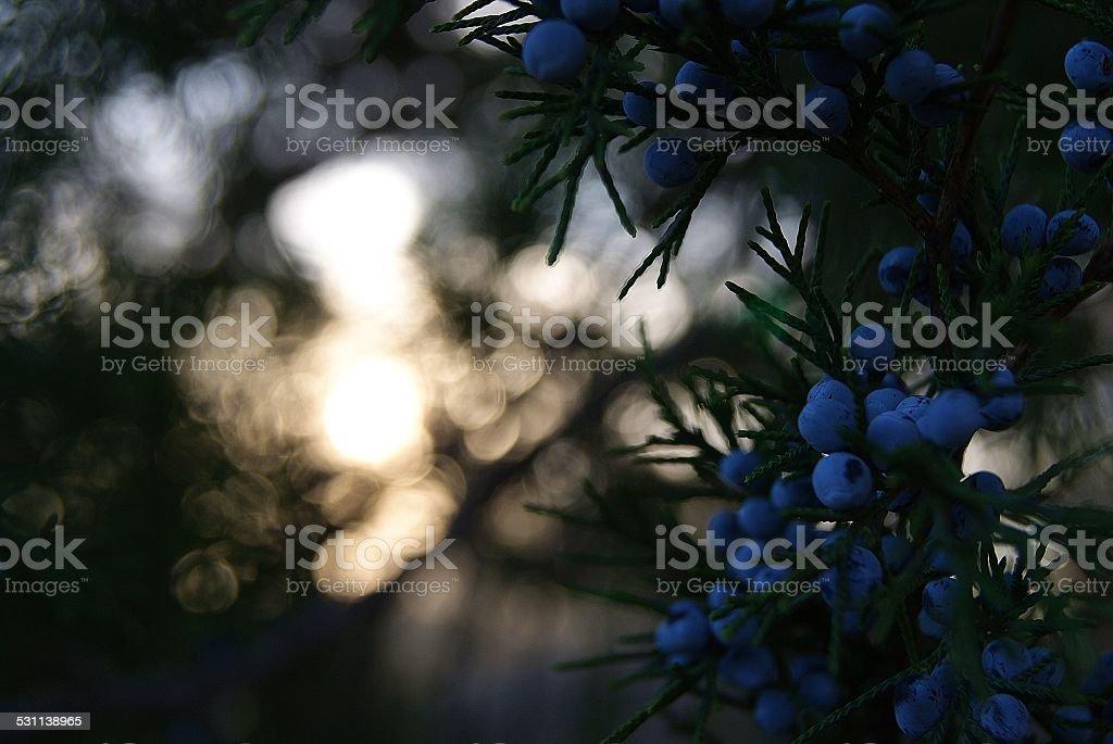 Dimly Lit Berries royalty-free stock photo