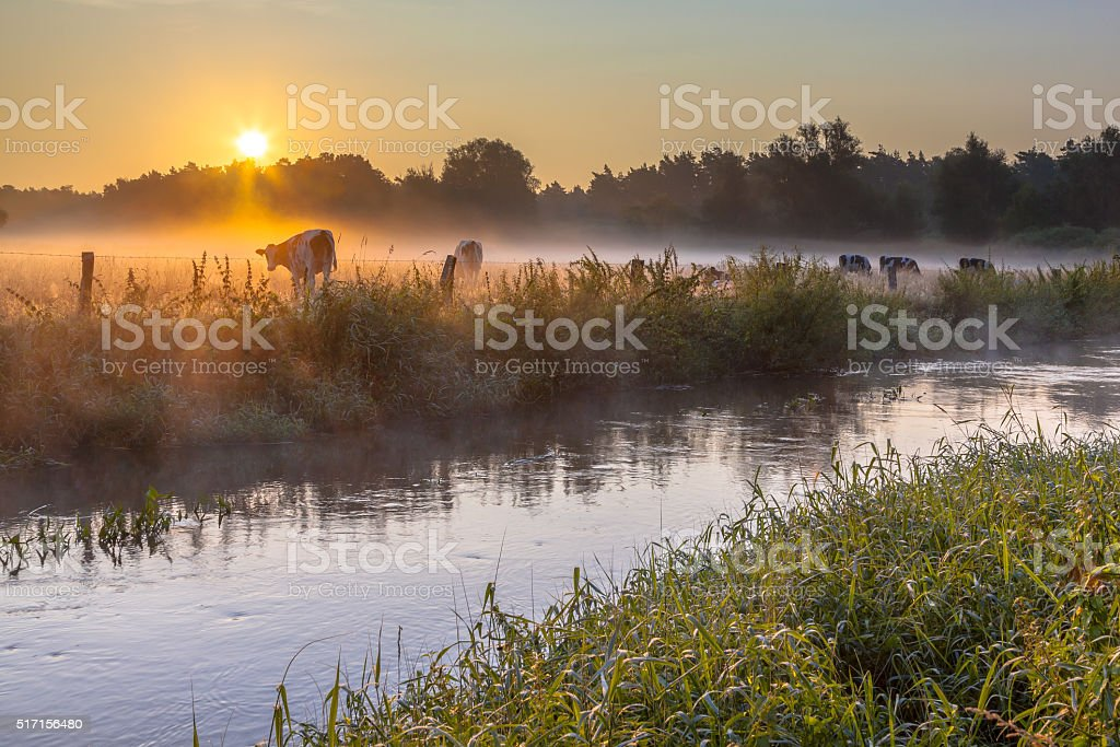 Dinkel River and cows stock photo