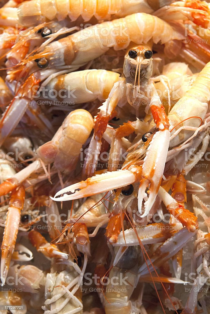 Dinner, Anyone?  Fresh Langoustine at a Fish Market stock photo