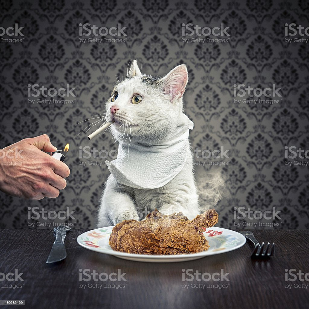 Dinner time stock photo