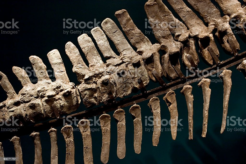 Dino Bones stock photo