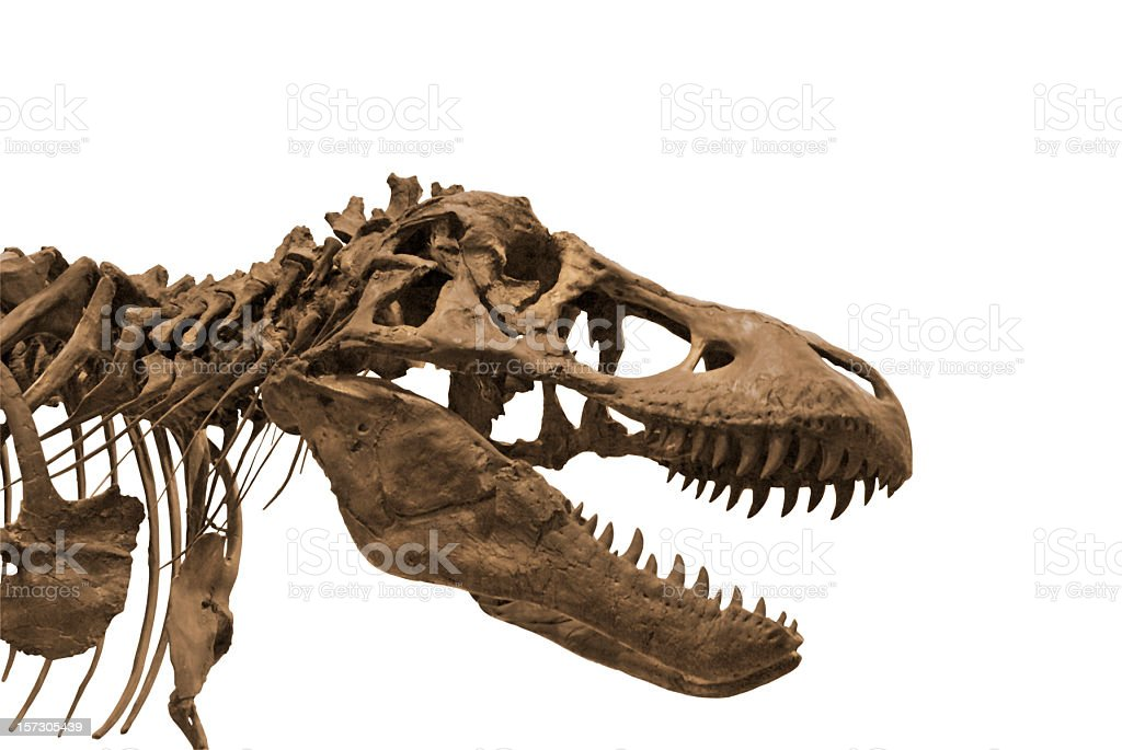 Dinosaur 3 royalty-free stock photo