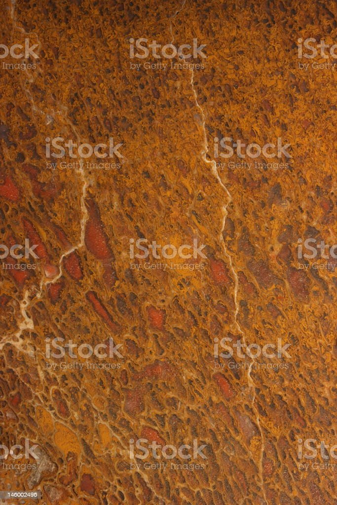 dinosaur bone series stock photo