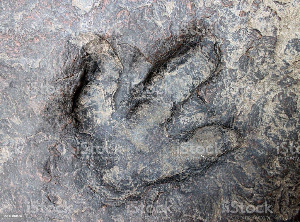 dinosaur footprint stock photo
