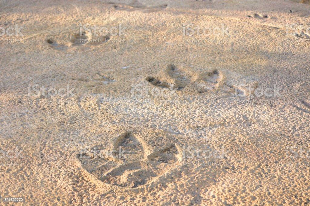 Dinosaur Footprints in Rock stock photo
